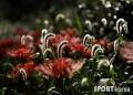 [사진여행] 꽃 촬..